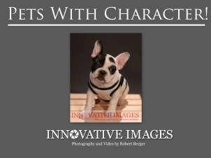 """Pets of Character"" Pet Portraits Dog Portraits Puppy Portrait Photography. Each have their own personality and character just like people! These are signature portraits by award winning photographer Robert Berger."